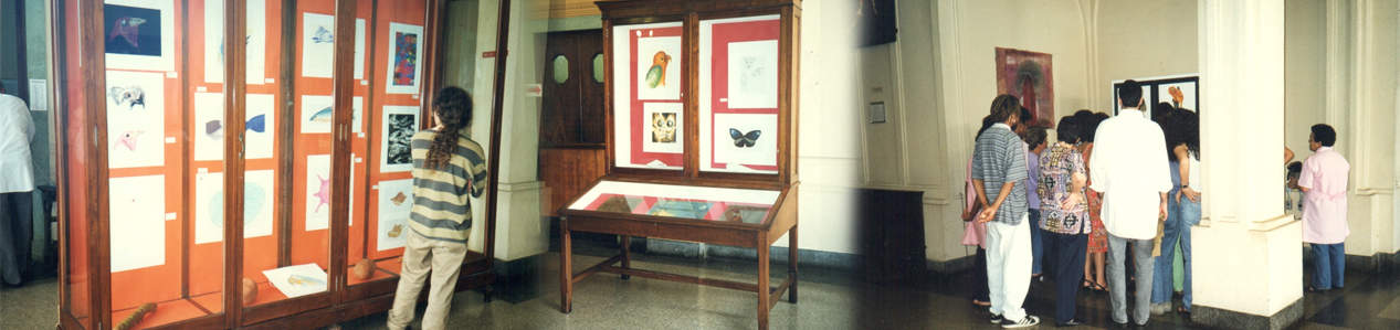 Arte: representação e recriação da natureza / Zoologia e plasticidade
