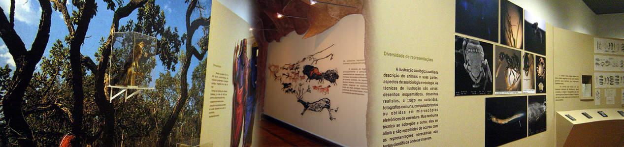 Ilustração em Zoologia: da paisagem ao microscópico