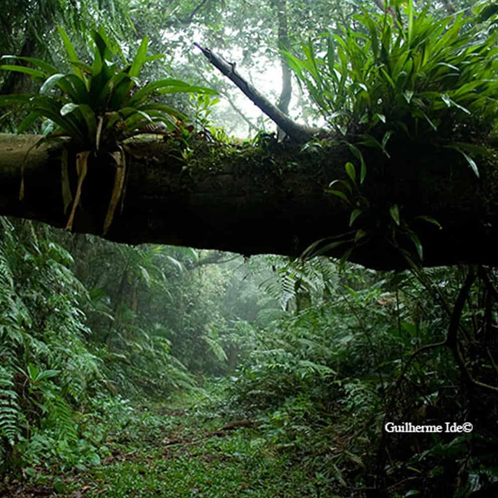 Estação Biológica de Boracéia