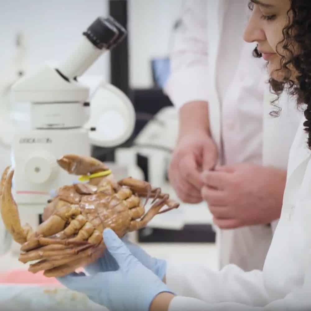Coleções Científicas, Orientações e Procedimentos