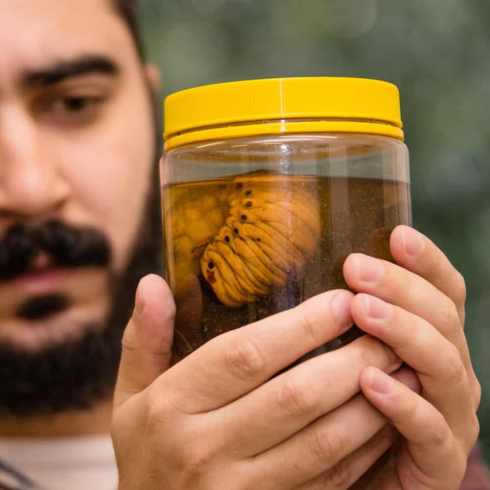 Serviço de Entomologia