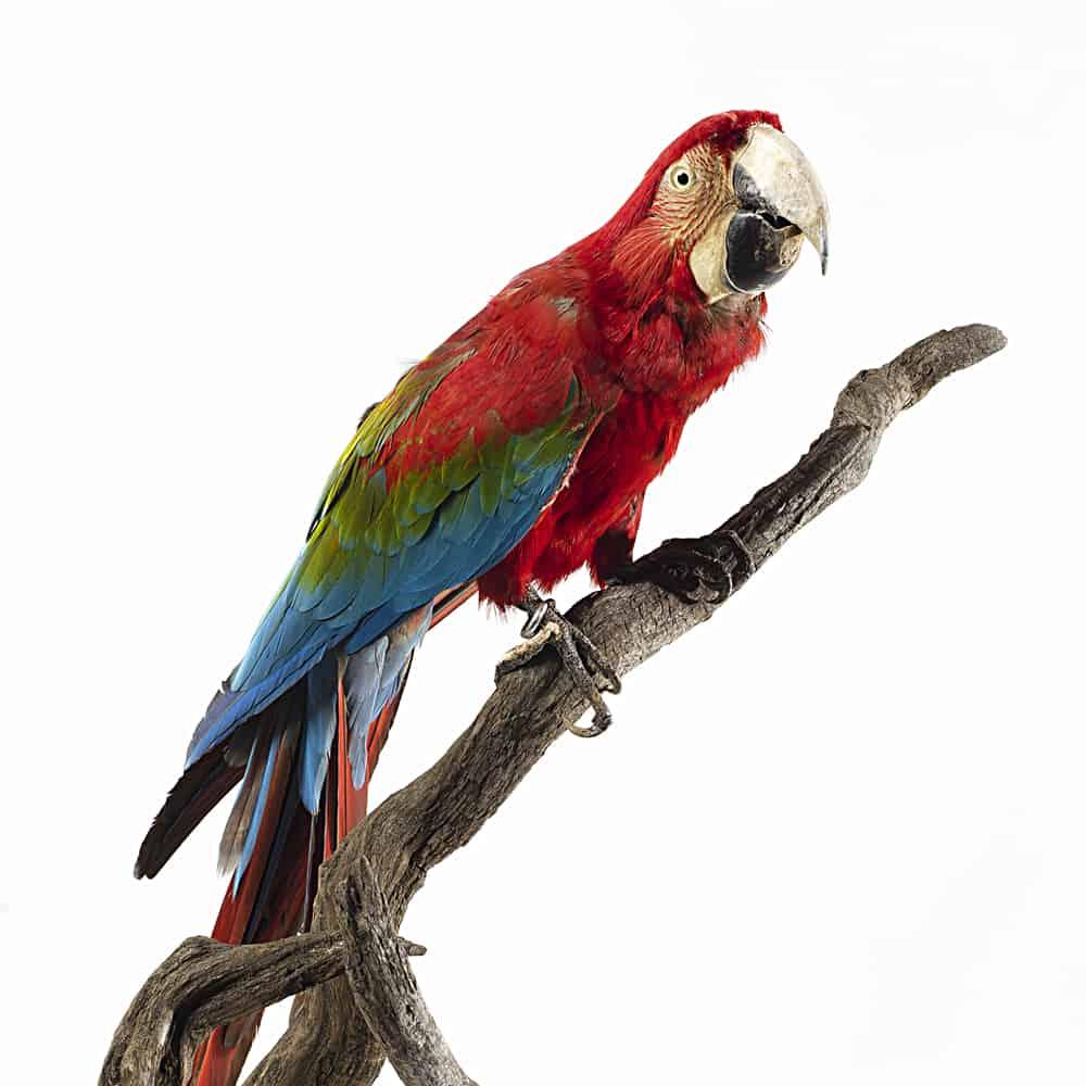ornitologia-index