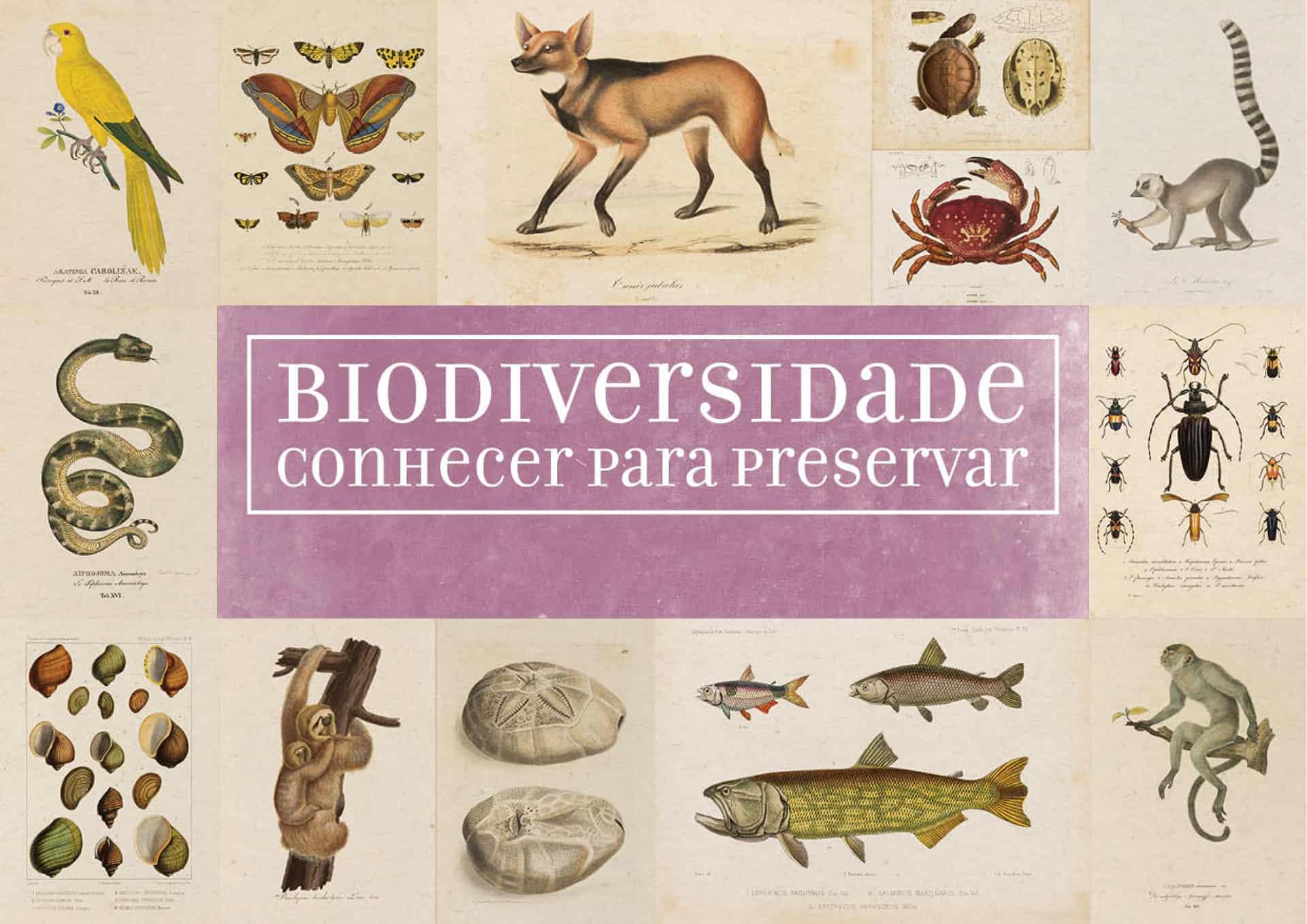 Biodiversidade: conhecer para preservar